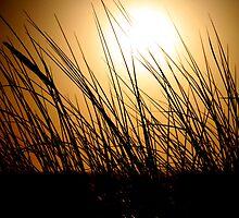 Golden Sky by Inga McCullough