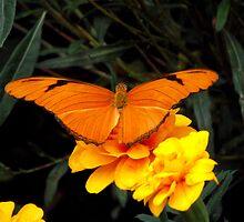 Orange Delight by Jamie  Armbruster