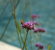 Bee on Flower by jamiecwagner