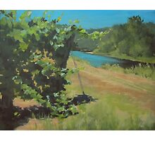 Vineyard on the River Photographic Print