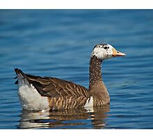 Not just another Goose Photographic Print