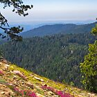 Fresno dome trail near North Fork by David Chesluk