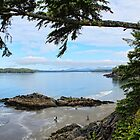 Clayoquot Sound, Pacific West Coast, Vancouver Island, BC,Canada by Brenda Boisvert