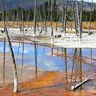 Reflections in Yellowstone NP by aussiedi