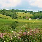 The Country Lane by lorilee