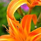 Tiger Lilies  by DearMsWildOne