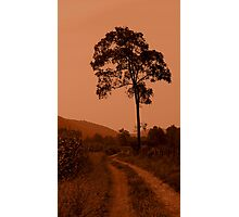 Country Road and Tree - Pendleton County Photographic Print