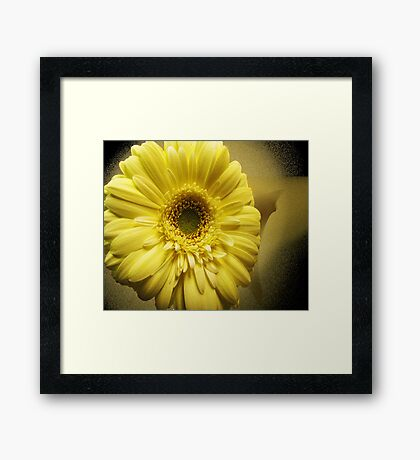 Yellow Gerbera Framed Print