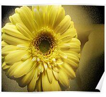 Yellow Gerbera Poster