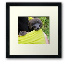Three Toed Sloth Framed Print