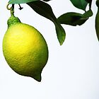 LEMON by Cristina C.p.Neumann