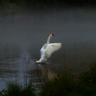 Swan Song II by Barbara Gerstner