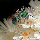 Green Bee - Macro by Debbie Pinard