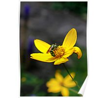 Green Bee on a Yellow Daisy Poster
