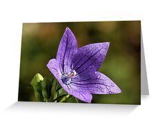 Last To Bloom Greeting Card