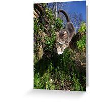 Jumping cat Greeting Card