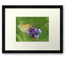 Sweet Alfalfa Framed Print