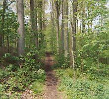 Path through le bois by anthonyrdurham
