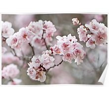 Elegant Blossom Poster