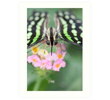 butterfly on the flower Art Print