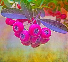 Pink Berries by Neha  Gupta