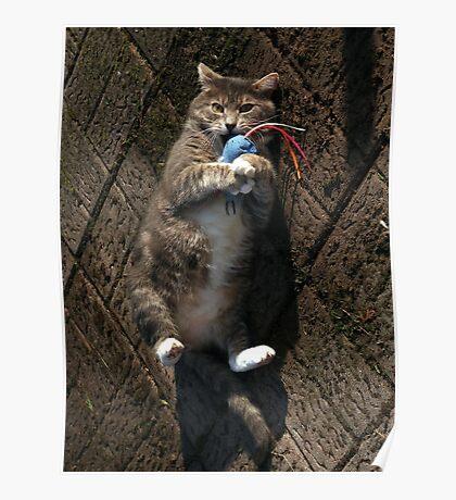 Happy cat Poster