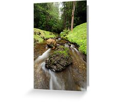 Downstream from Strickland Falls Greeting Card