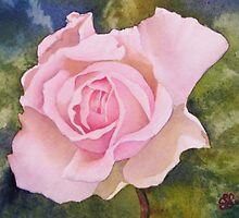 Softly Pink by Fiona  Lee