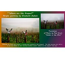 where are the grapes translation card Photographic Print