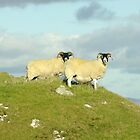 Two sheep on hilltop by John Butterfield