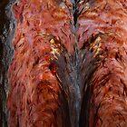 split log symmetry by Mark Batten-O'Donohoe