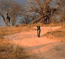 Who's watching who? South Africa by Bassy
