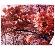 Intense Pink - Blossum Poster
