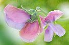 very sweet peas by Teresa Pople