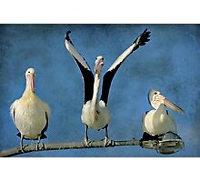 The Pelican Olympics - Pelican Series Photographic Print