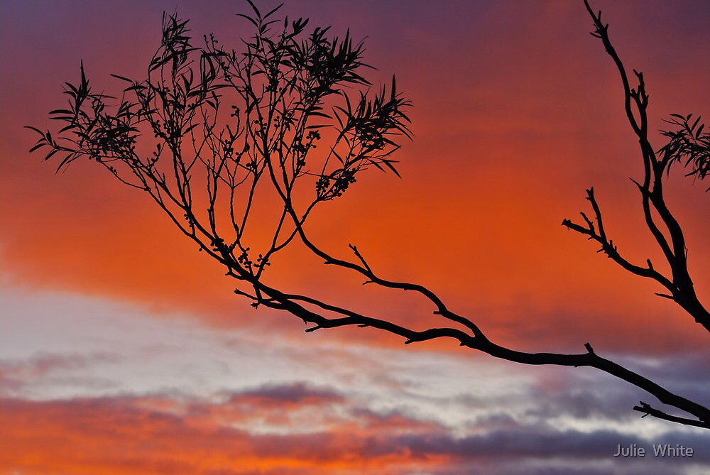 Echo Point Sunset. by Julie  White