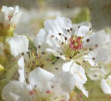 blossoms by Teresa Pople