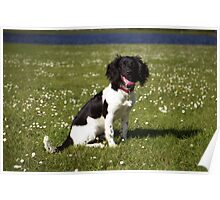 Lily at Six months Poster