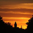 Golden Evening Silhouettes by Daniela Weil