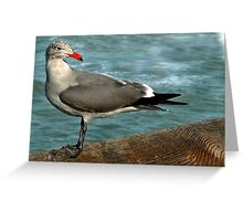 My Gull Friday Greeting Card