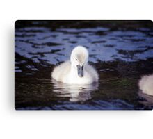 Cygnet of Llanfairfechan Canvas Print