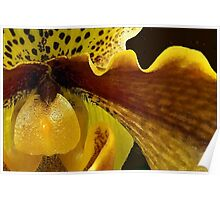 Orchid in Yellow Ochre Poster
