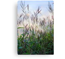 Morning Grass Canvas Print