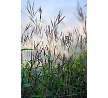 Morning Grass Photographic Print