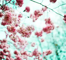 Cherry Blossom by Michaela Rother