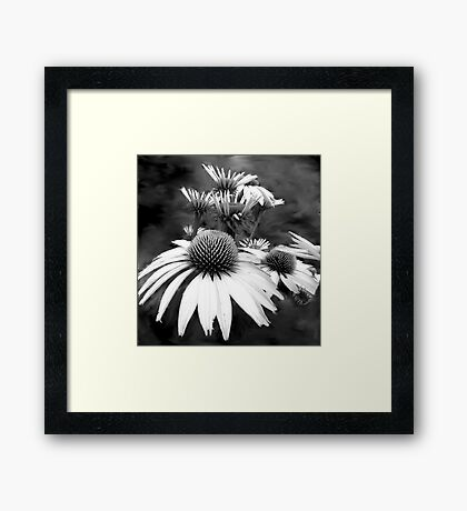 Monotone Cone Flowers with Smear!! Framed Print