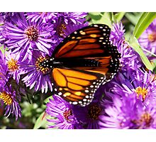 Butterfly Runway  Photographic Print