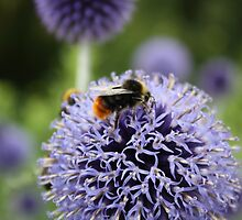 Lunch on the Thistle by MichelleRees