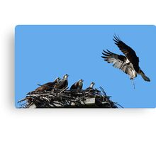 Daddy's home!!! and he brought us a stick! Canvas Print
