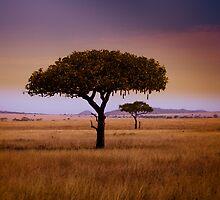 Serengeti by Alina Uritskaya